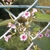 野の花のネーミング