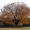 庄内緑地の秋
