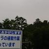 今日の犬山城は…『早く咲いてほしいねぇ』