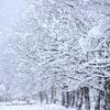 冬の土用入りしました。寒さ本番、季節の変わり目です