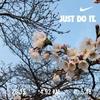 【ランニング日記】春分の日。祝日の土曜日。なんとなく損した気分ですが、0.5分咲きのソメイヨシノを見つけました。