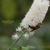 ハニーの香り  新宿ミツバチプロジェクト