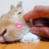 【ミニウサギのサスケ先輩】うさぎのかわいい仕草に癒されて少しでも笑ってみよ!君は独りじゃないから