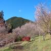 【サイクリングコース37】城峯公園と桜山公園の冬桜 【ランチ】鬼石市街 てんぐ屋