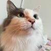 【猫ブログ】奇跡の一枚。  ココ篇