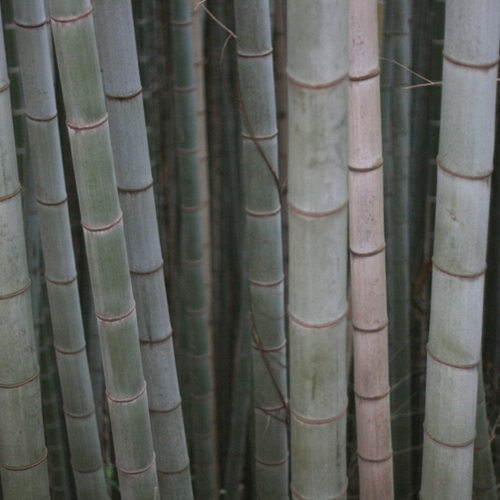 草戸稲荷神社の展望スポットに行く。