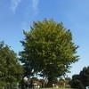 小田原フラワーガーデンの秋バラがきれいです