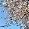 桜が咲きました(^_^)