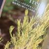 オーストラリアの精油を巡る旅② 〜Tea Tree 〜