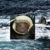 第4の波(Fourth Wave Coffee)とマルチロースター・モデル(Multiroaster Model)