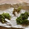【食べる】山形の山菜が美味しすぎたので、お取り寄せしようか悩んでます。