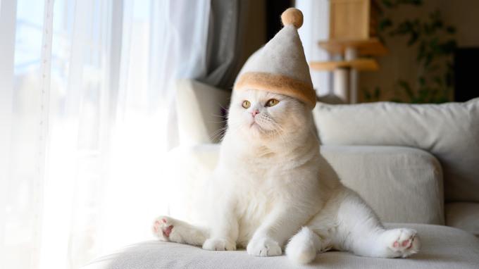 帽子をかぶった猫たちがかわいすぎる!SNSで話題の猫写真の裏側お見せします