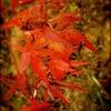 秋色と冬色