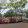 子連れお出かけ 江戸川区 総合レクリエーション公園① 新左近川親水公園