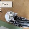 猫雑記 ~鳴かない猫~
