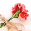 母の日にはカーネーションの花束を贈る