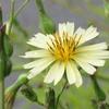 道端の花6