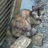 大洗の猫…