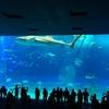 沖縄旅行記6~「美ら海水族館」とイルカショー