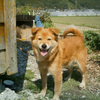 山の神にいた犬(3)