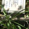 万葉歌碑を訪ねて(その663,664,665)―加古川市稲美町 中央公園万葉の森―万葉集 巻三 三三四、巻四 六六九、巻十九 四二九一