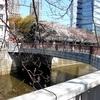 ★今年の花見はどこもかしこも「宴会禁止」に…。今日目黒川で。