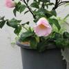 14>今日の庭花
