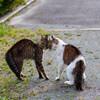 穏やかな夕暮れ時の公園で、ネコさん同士のケンカの場面に出くわした話