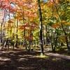 軽井沢高原教会&石の教会へ紅葉を見に行って来た。