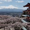 忍野の川沿いに咲く桜並木 新倉山浅間・忠霊塔の富士と夜桜