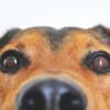 パブロフの犬とドミナントモーション★★★★