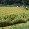 改良雄町の収穫