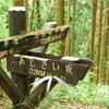 【一眼レフ】太平山のあじさい坂で今年の紫陽花を撮影してきた