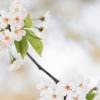 葉桜の季節に君を想うということ【感想】(歌野晶午/文春文庫)
