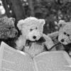 未だ生まれぬ書評についての覚書|感情で読むか、理性で読むか