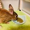 ウサギのペレット容器を変えてイタズラ対策