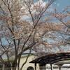 〈成美〉ぽかぽか春のお散歩活動