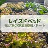 【2021年6月】レイズドベッドによる家庭菜園レポート
