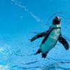 【サンシャイン水族館】天空のペンギンでフォトジェニックな写真撮ってきた