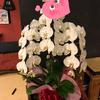 【某狐娘カフェ1周年おめでとう】胡蝶蘭を送る時にやってはいけないこと