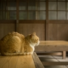 バレエレッスンだけで猫背改善は難しい