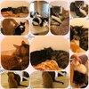 犬と猫のカフェ 有吉工務店を紹介するにゃ