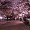 大阪城で夜桜ランニング