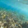 井田海水浴場 沼津の知る人ぞ知る穴場ビーチがかなりイチオシ