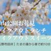 【玉野市お花見】深山公園の桜開花状況とテイクアウトのランチ〈2021年〉
