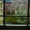ドクた、の桜・デジカメ徘徊 6