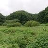 横沢入里山保全地域を案内していただく