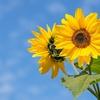今日、7月7日(日)は「小暑」。今日から夏本番!でも、関東は梅雨空、西日本は「小暑」らしい暑さに