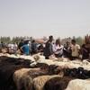 ウイグル奥地の街カシュガルで、超ローカルな「羊牛バザール」を見学!