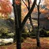 静寂の中にある美しさ 京都大原三千院 (Kyoto, Ohara, Sanzenin)